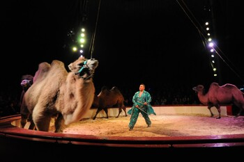 Circus Royal Programm 2014